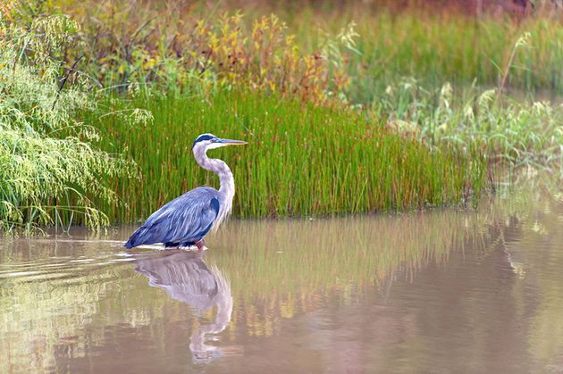 The-Blackwater-National-Wildlife-Refuge-located-just-12-miles-south-of-Cambridge