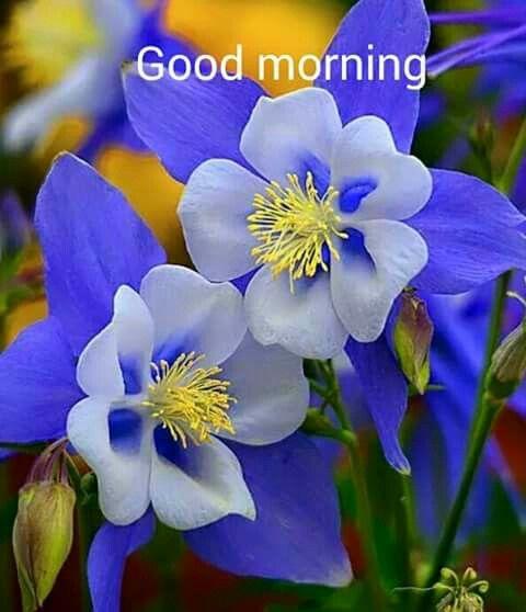 صور صباح الخير بالانجليزية 15