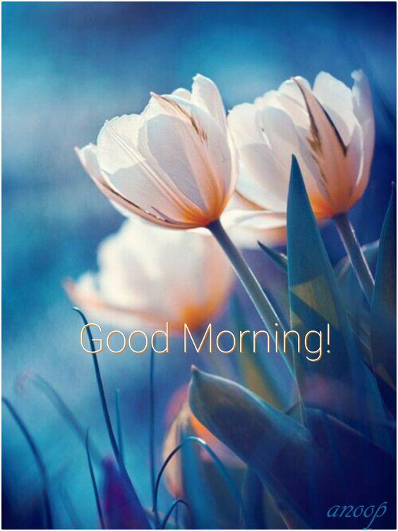 صور صباح الخير بالانجليزية 24